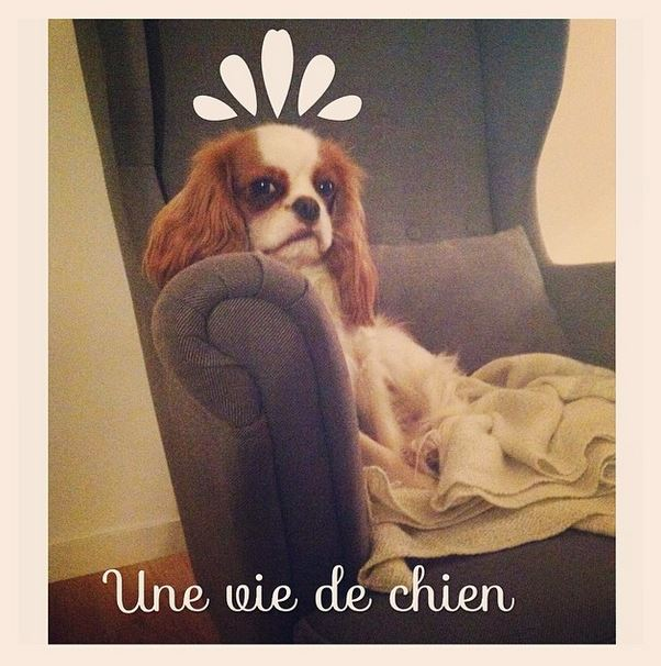 Holly cavalier king charles